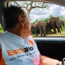 Auch die Elefanten in Südafrika bestaunen das Eschathlon-Shirt...